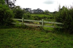 The fence by Aroha-Photography