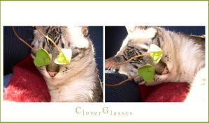 Clover Glasses by cat-lovers