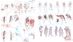 All Muscle Notes (Arms, Legs, Body/Back, and Head) by TheDracoJayProduct