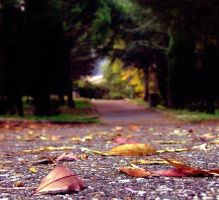 Autumn in Italy by marjol3in1977