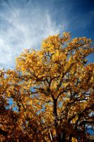 Texas Fall Color by Nevma