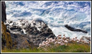 Flowers by the sea IV by jmorante77