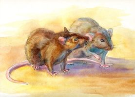 Rat by LouieLorry