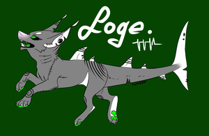 SharkDogeee by HungryRainbowEater