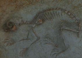 FOSSIL by louboumian