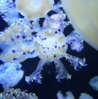 Jellyfish in Blue. by IveForgotten