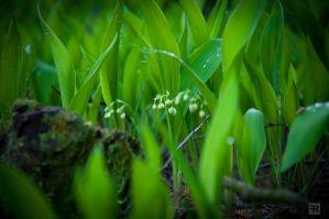 Magical Spring Forest Plants 1 by FilipR8