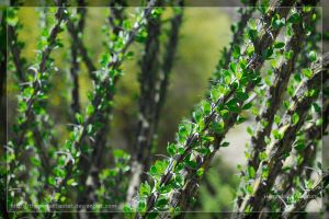 Thorns by theperfectlestat