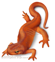 Red Eft by khiton