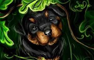 Rottweiler puppy by SalamanDra-S
