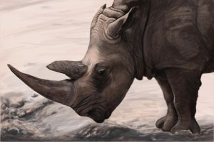 White Rhinoceros by sarahddl