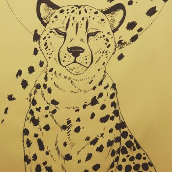 cheetah by Lalobadelcrepusculo