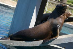 Sea Lion 01 by OverStocked