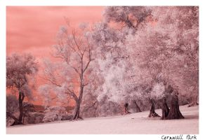 Cornwall Park by Cabalistant