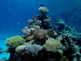 Coral reef 2 by Dracofemi