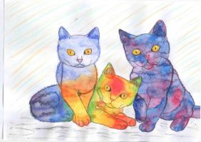 Sunset cat, Rainbow cat and Galaxy cat by xShadowArt
