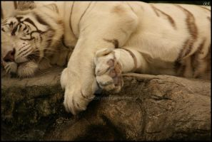 White Tiger Paw by asoi