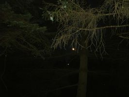 Nighttime in the Woods II by SacredJourneyDesigns