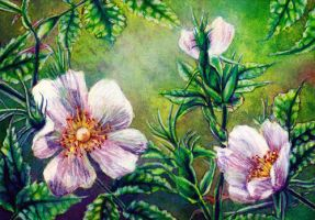 dog rose by EllerArt