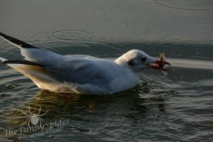 Wild Gull with Fish by TheFunnySpider