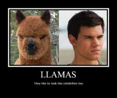 Funny llama poster by Luckypanic