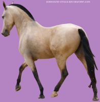 tackless buckskin andalusian. by cas887