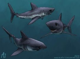 SW 2014 Salmon Shark by ALA1N-J