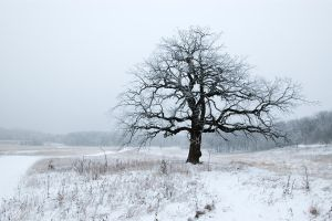 frosty oak by BrianWolfe