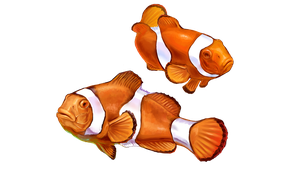 Clown Fish by sister-in-arms