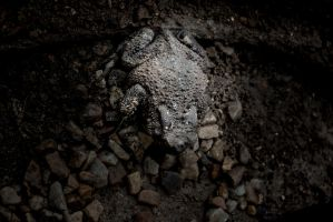 The toad who thought he was Batman. by Jbuth