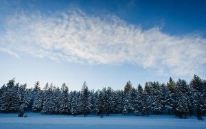 Winter Pines and Cloud by nathanspotts