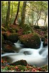 Autumn in Kennall Vale by Kernow-Photography