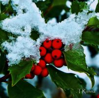 Snow on Holly by TRunna