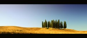 Cypresses by theslider