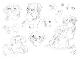 Puppies Sketch by yanagi-san