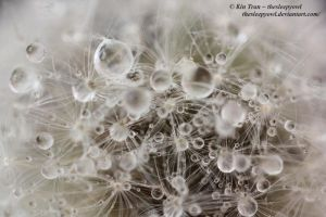 Dandelion raindrops by thesleepyowl