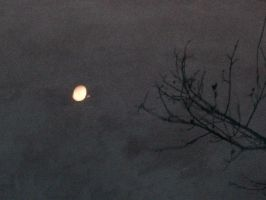 The Moon and Branch in water by Arboris-Silvestre