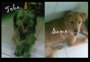 My Dogs, were by macangadungan