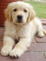Fluffy Puppy by Lorna-Ann8