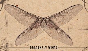 dragonfly wings by deadsumostock