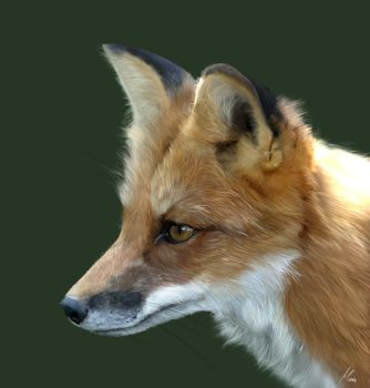 Photorealism fox by mau-wolf