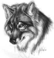 A Wolf by deadhowl