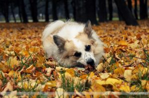 Colours of Autumn and Mr. Teddy by l-CoRaLiNe-l