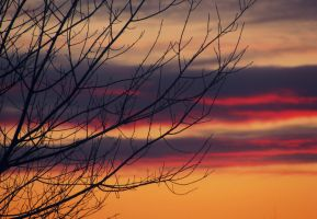 Sunset Branches by xxIMPERFECTIONS