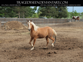 Palomino Stock 12 by tragedyseen