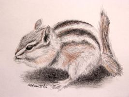 Chipmunk by mbeckett