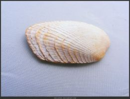 Unrestricted Object Stock - Sea Shell 07 by shelldevil