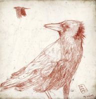 CroW by fbruno
