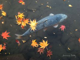 Koi in Autumn 2 by Majnouna