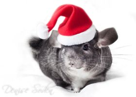 Christmas Chinchilla by DeniseSoden